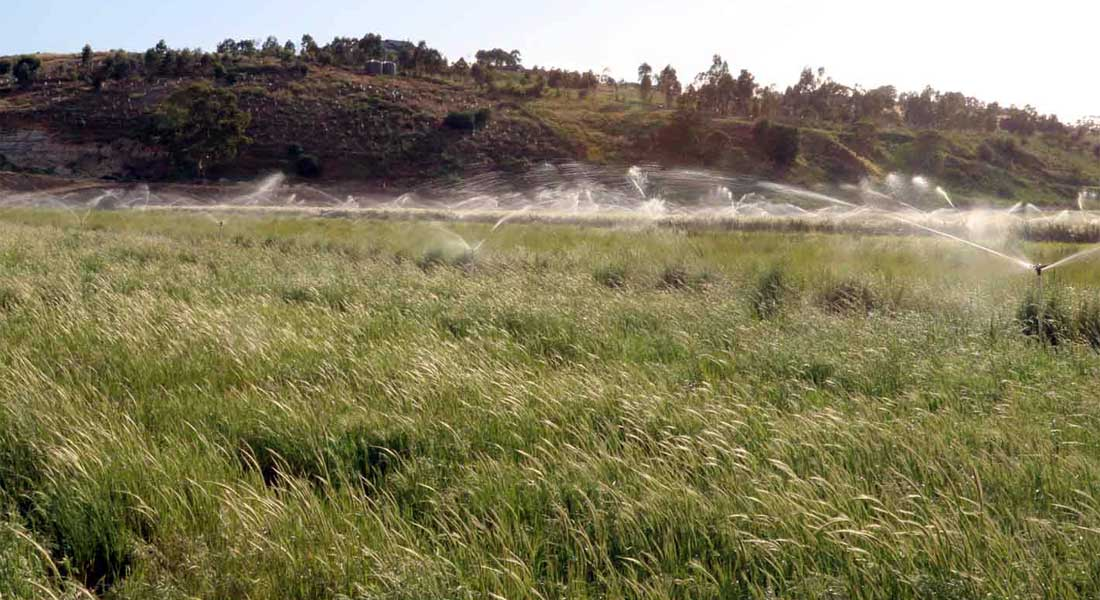 Watering at the Seed Production Area for native grasses